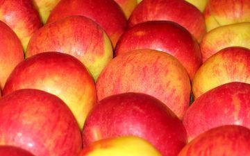 фрукты, яблоки, плоды