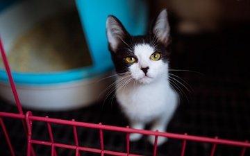 портрет, мордочка, усы, кошка, взгляд, котенок, сидит, домик, решетка, желтые глаза