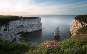 цветы, трава, скалы, природа, берег, море
