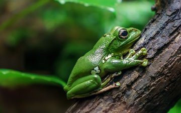 nature, tree, background, frog, bark, amphibians