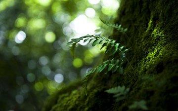 природа, дерево, листья, макро