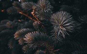 природа, елка, хвоя, ветки, ель, иголки