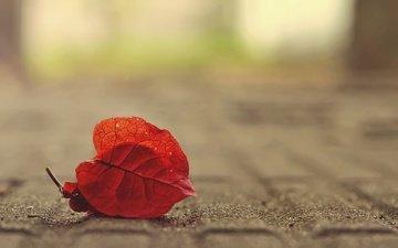 природа, фон, осень, лист, размытость