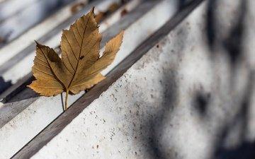 природа, фон, осень, лист, кленовый лист