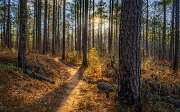 trees, nature, forest, summer, path