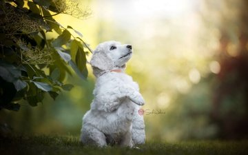 nature, leaves, branches, summer, dog, bokeh, sarah weber