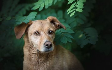 nature, greens, branches, dog, each, labrador, bokeh