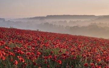 природа, утро, туман, поле, лето, красные, маки