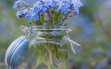 цветы, размытость, букет, незабудки, банка