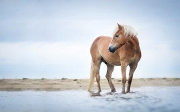 небо, лошадь, река, берег, конь, грива, ло
