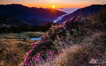 the sky, flowers, grass, the evening, mountains, the sun, hills, nature, flowering, forest, sunset, rays, landscape, fog, horizon, the bushes, the slopes, pink, vegetation, rhododendrons