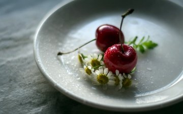 flowers, daisy, cherry, saucer, berries, julie jablonski