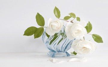 цветы, розы, лепестки, букет, белый фон, белые, ваза