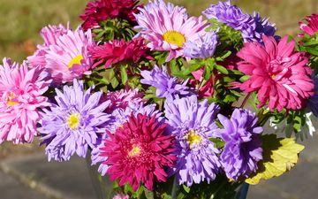 цветы, осень, стол, букет, ваза, астры