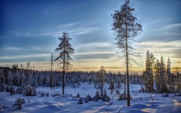 the sky, trees, snow, forest, winter, finland