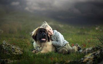 dog, boy, friends