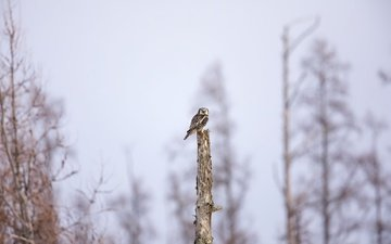 owl, nature, tree, background, bird