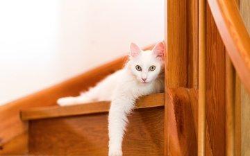 ступеньки, кошка, взгляд
