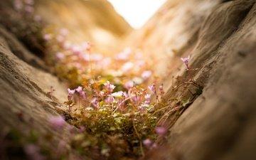 свет, цветы, природа, макро
