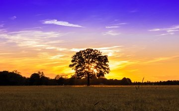 the sky, light, clouds, tree, sunset, field