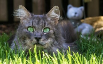 grass, cat, muzzle, mustache, look