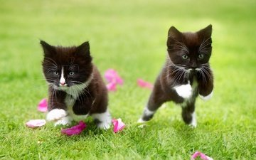 grass, petals, a couple, the game, cats, kids, kittens