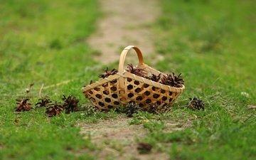 трава, лес, шишки, корзинка