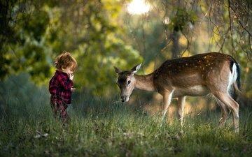 трава, природа, лес, олень, ребенок, мальчик