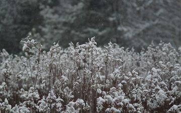 трава, снег, природа, растения, зима, луг, растение