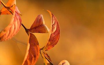ветка, природа, листья, осень