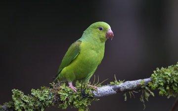 ветка, природа, птица, клюв, перья, попугай