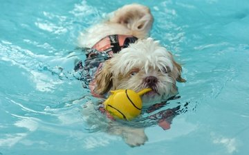 вода, собака, игрушка