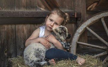 сено, взгляд, дети, девочка, нежность, овечка, овца