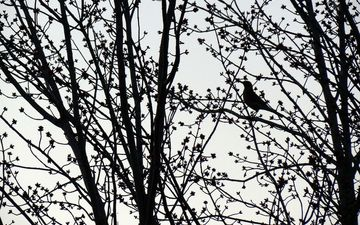 trees, branches, bird, silhouette, tree