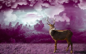 grass, clouds, deer, photoshop