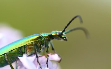 beetle, insect, background, antennae