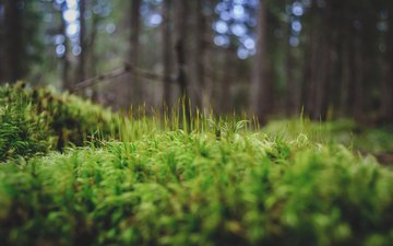 grass, trees, greens, forest, macro, moss, andrei pavel