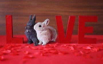 животные, лепестки, маленький, любовь, кролик, кролики, зайчик, love live
