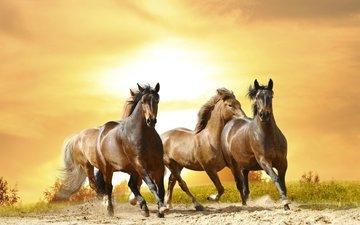 лошадь, песок, лошади, пыль, грива, бег, хвост, скакун, рысак