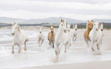 зима, животные, лошади