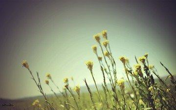 небо, цветы, трава, природа, закат, поле, полевые цветы