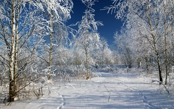 trees, snow, winter, frost, russia, traces