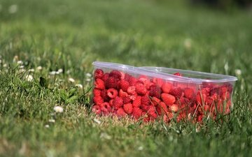 flowers, grass, nature, greens, raspberry, summer, berries, lawn, container