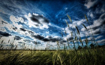 the sky, grass, clouds, the evening, horizon, meadow, ears