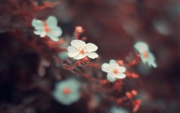 flowers, nature, tree, macro, spring, cherry blossoms