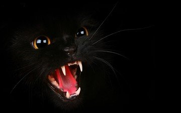 eyes, face, background, cat, mustache, look, black, teeth