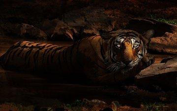тигр, глаза, морда, ночь, грязь, камни, взгляд, водоем, лежит, купание, зоопарк, темно