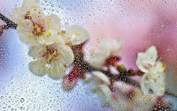 цветы, ветка, макро, капли, брызги, весна, стекло, мокро, всплески
