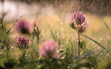 flowers, grass, clover, summer, blur, rain