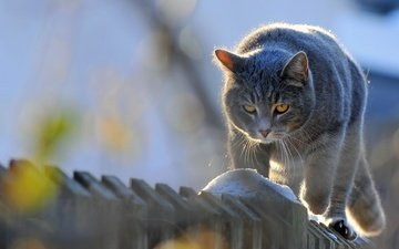 кот, мордочка, усы, кошка, взгляд, забор, изгородь